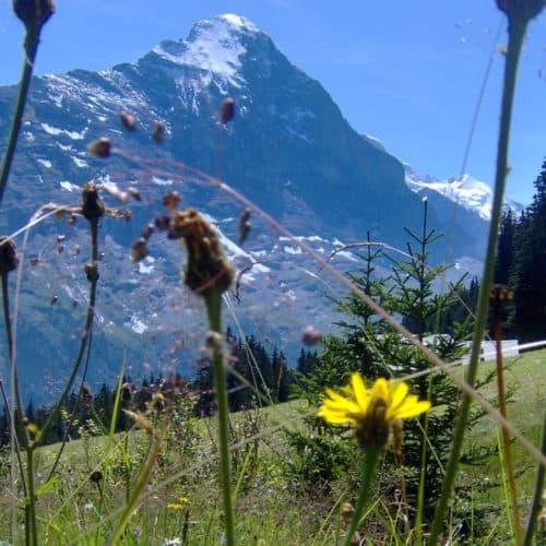 Grindelwald (1)
