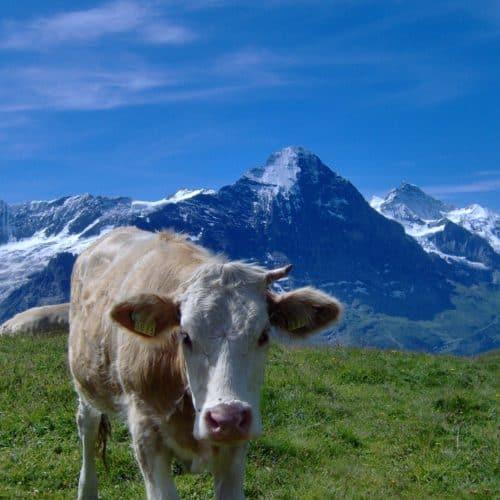 Grindelwald (18)