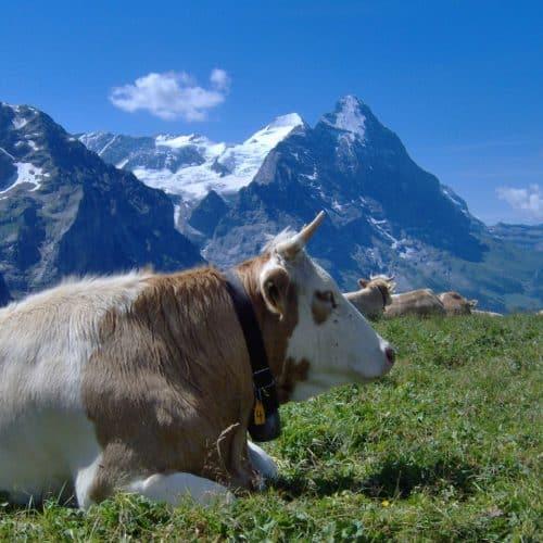 Grindelwald (19)
