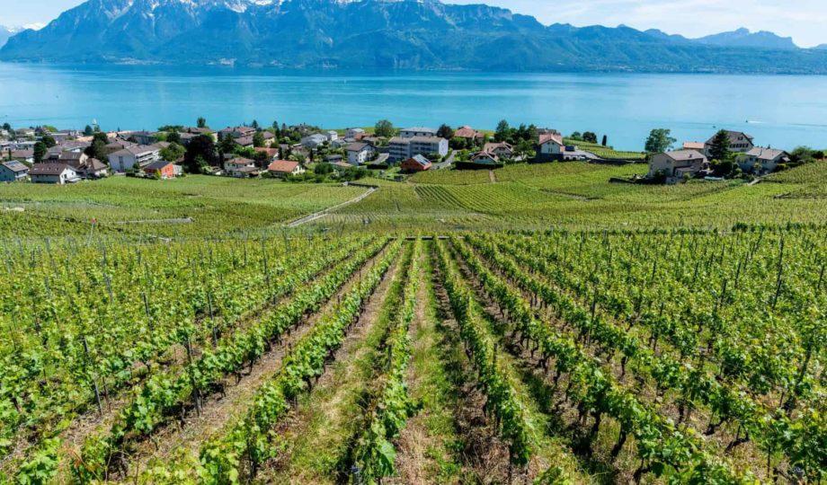 Lake Geneva vineyards 5